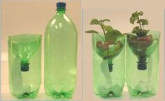 Soda Bottle Hydroponics – Experiments for Kids Biodynamic Gardening, Hydroponic Gardening, Hydroponics, Container Gardening, Science Projects, Projects To Try, Indoor Water Garden, Bottle Garden, Do It Yourself Crafts