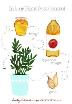 ohdeardrea: natural pest control for indoor plants