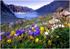 Mountain flowers - nature, wild, flowers, mountains
