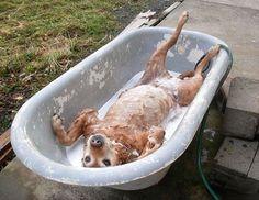 A cara de quem adora um banho!