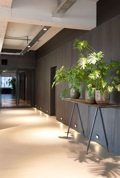 mid grey walls and pale limestone floor - fabulous idea for an entrance hall - Focus Brands © Remy Meijers
