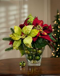Poinsettia arrangement in glass vase with Christmas ball ornaments..love to have these scattered around most every room..Bella Donna