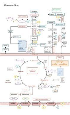 Rutas metabolicas unidas