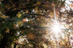 Controsole in autunno
