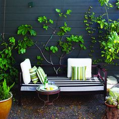 Small seating area. A metal-framed daybed sits on a small patio next to the back deck. A young espaliered fig is displayed against the dark ex...