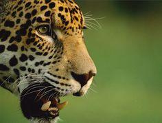 Ningún animal debería estar en peligro de extinción.