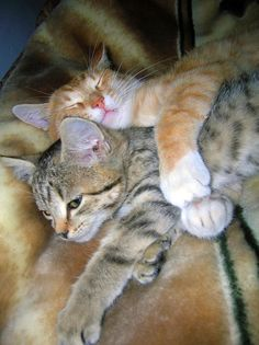 .Snuggling Kitties.