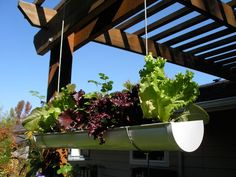 Visually appealing and space-optimizing rain-gutter garden!  Exciting spring project!  I think alternating flowers and lettuce/spinach would be perfect!  Maybe add some herbs too!