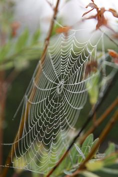 Patterns in nature, spider web Patterns In Nature, Textures Patterns, Spider Art, Spider Webs, Itsy Bitsy Spider, Dew Drops, Science And Nature, Macro Photography, Natural World