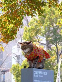 Cats, Yokohama
