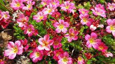 Garden Inspiration, Helpful Hints, Plants, Cement, Espadrilles, Gardens, Deko, Gypsum, Espadrilles Outfit