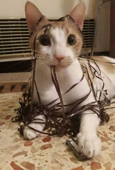 Happy Caturday Saturday to all cat lovers. Enjoy your weekend and pin cute cats and kittens all day. Drink lots of coffee also. Cute Kittens, Cats And Kittens, Kitty Cats, Cat Cat, Cool Cats, I Love Cats, Funny Cats, Funny Animals, Cute Animals