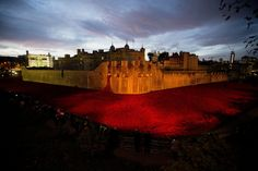 """Breathtaking photos show how Britain does Veterans Day """" Veterans Day isn't just an American holiday. While Americans remember veterans of all wars, the federal holiday coincides with Armistice Day or. Knitted Poppies, Ceramic Poppies, Ceramic Flowers, London Fields, Remember The Fallen, Armistice Day, Flanders Field, Purple Sky, Remembrance Day"""