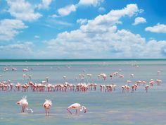 Sardegna - Fenicotteri rosa