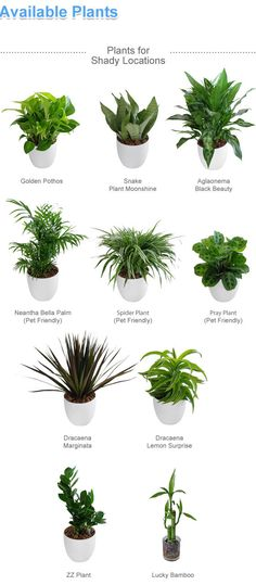 indoor plants tabletops - Google Search