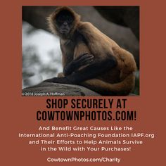 Charity Gifts, Surviving In The Wild, Photo S, Wildlife, Presents, Nature, Animals, Shopping, Gifts