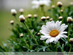 Flower. 🌸 we are very happy