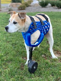 Pet Prosthetics Get a Boost From 3D Printing   WIRED 3d Dog, Steampunk, Best Headphones, Young Animal, Animal Projects, Pet Health, Fun Workouts, 3d Printing, Dogs