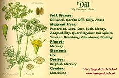 Dill Magical Properties - The Magical Circle School - www.themagicalcircle.net