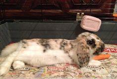 Peanut spaparazzato sul suo lettino :)