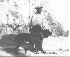 1930 Neapolitan Mastiff
