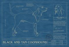 Animal Blueprint Company: Black and Tan Coonhound Dog Blueprint