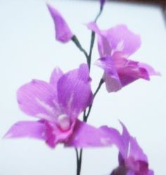 DIY Paper Flower - Orchids