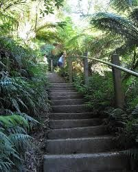 the thousand steps Dandenong Ranges, Melbourne, Australia Walked up them many times, never thought I'd look at them in a photo from other side of the world and wonder if I still could! Thousand Steps, 1000 Steps, Just Go, Melbourne Australia, Weekend Getaways, People Running, Ranges, Stairs, Goal