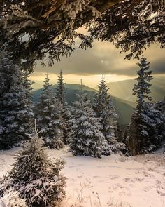 Winter Forest Backyard View Up in the Hills. Winter Forest Backyard View Up in the Hills. Landscape Photos, Landscape Art, Landscape Photography, Nature Photography, Winter Photography, Travel Photography, Johanna Basford Enchanted Forest, Outdoor Reisen, Snow