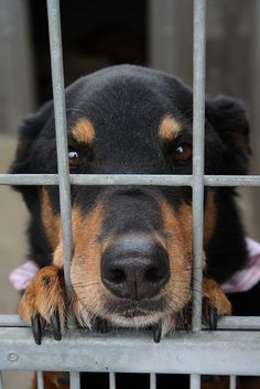 Devoted animal welfare groups in Singapore are experiencing financial difficulties as the number of shelter dogs and the costs to care for them continue to increase. Praise a new initiative urging businesses to financially support these struggling organizations, improving the lives of thousands of animals.