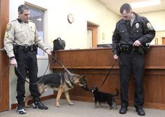 Tiny police puppies aren't afraid of big police dogs at all! ... Cleveland Metroparks rangers introduce new K-9 puppy