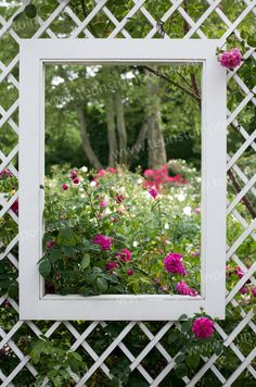 Picture framed garden!
