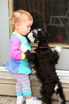 D'awww!!! Schnauzer lovin'!! Love my mini Schnauzer.