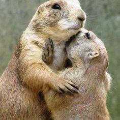 Prairie Dogs : )