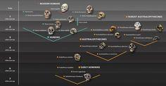 40. Este panel actualizado sobre los distintos antepasados del ser humano se encuentra expuesto en el Museo de Historia Natural de Londres.