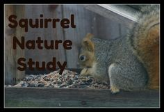 Please Note: If you do not have squirrels to observe, pick another mammal in your local area that you can learn about. Squirrels are r...