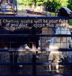What's the first thing I always tell the neighborhood kids when they come to fish? Don't let the goats out! And what to they do? Let the goats out.
