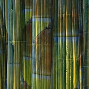 How to Prevent Mold on an Outdoor Bamboo Fence   eHow