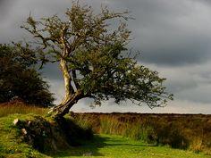 Portait of a Tree by parallel-pam.deviantart.com on @DeviantArt