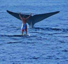 King of the world! Surfer vs Whale