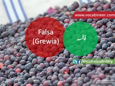Fruits Vocabulary with Urdu / Hindi, Pictures vocabulary in Urdu, Fruits names with pictures, Fruits vocabulary in Urdu, Names of fruits with pictures, Fruits names with pictures, Vocabulary about fruits, Fruits names., Vocabulary in Urdu, Pictures vocabulary, Vocabulary for daily use, Everyday used vocabulary, English vocabulary, Vocabulary in Hindi / Urdu, Urdu to English, Hindi to English, ESL vocabulary, GRE vocabulary, CSS vocabulary, IAS vocabulary, English vocabulary in Hindi  Urdu English Speaking Practice, Learn English Words, Learning English, Gre Vocabulary, English Vocabulary, Fruits Name With Picture, Basic English Sentences, English Prepositions, Fruit Names