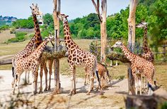Prague Zoo is one of the oldest zoos where is opened in also on the top 10 zoos around world list made by the TripAdvisor. Prague Zoo, Visit Prague, List Of Animals, Zoo Animals, Zoo Tickets, Giraffe Pictures, Zoological Garden, Puzzle Of The Day, In The Zoo