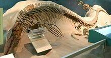 Tylosaurus prorigerspecimen which was found with a plesiosaur in its stomach