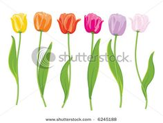 Find Color Tulips Vector Illustration stock images in HD and millions of other royalty-free stock photos, illustrations and vectors in the Shutterstock collection. Thousands of new, high-quality pictures added every day. Tulip Colors, Find Color, Ceramic Painting, High Quality Images, Tulips, Different Colors, Illustration Art, Illustrations, Groomsmen