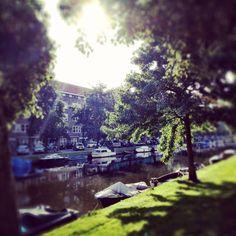 Morningglory @Admiralengracht, Amsterdam