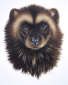 Totem Animal: The wolverine carries with it the passion for truth and learning, and for pursuing goals with fierce determination.