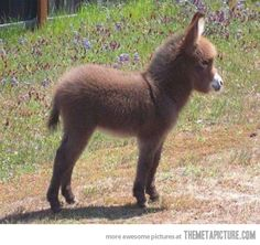 Baby donkey - The Meta Picture