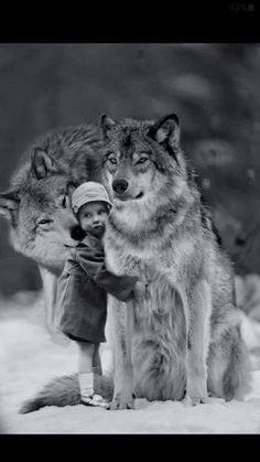 Robin Isely More Animals For Kids, Animals And Pets, Baby Animals, Cute Animals, Wolf Photos, Wolf Pictures, Wolf Spirit, Spirit Animal, Beautiful Creatures