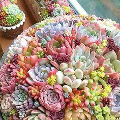 Succulent Bowls, Succulent Bonsai, Air Plant Terrarium, Succulent Gardening, Container Gardening, Succulents In Containers, Cacti And Succulents, Planting Succulents, Weird Plants