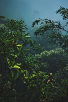 Blue Mountains National Park, Australia by Jeff Finley Adventure Activities, Adventure Tours, Mount Rainier National Park, Beautiful Forest, Above The Clouds, Paragliding, Blue Mountain, Nature Reserve, Aerial View